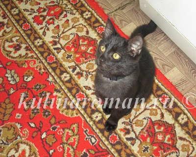 кот в ожидании кусочка мяса