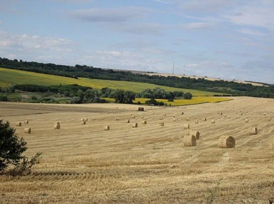 собрали пшеницу