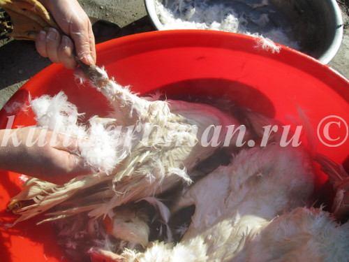 ощипывание гусей