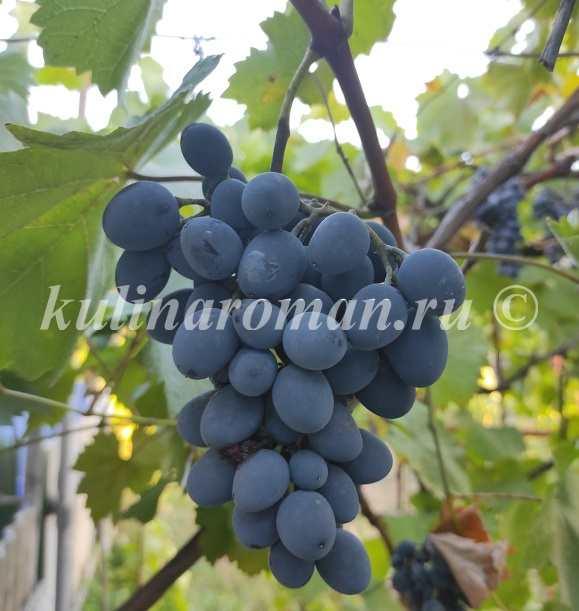 виноград на зиму